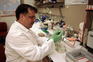 Analysis of DNA for screening transgenic mice